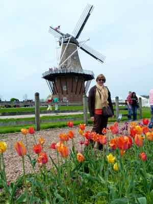 Holland, MI Windmill and Tulips