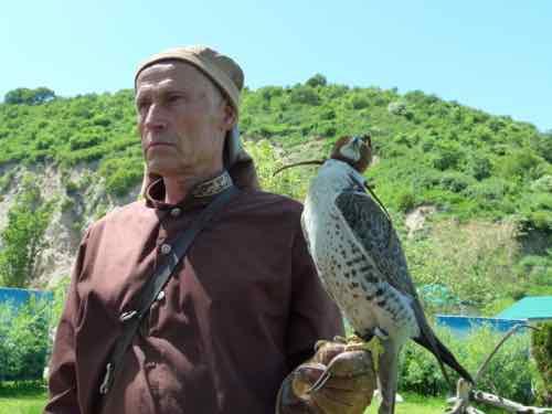 Falconer Kazakhstan