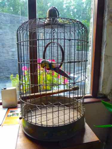 Ross Castle reception area parrot?