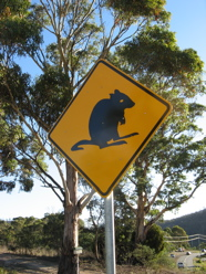 watch for wallabies - Tasmanian roadsign