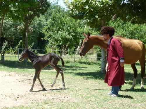 Akhal-Teke horse with breeder