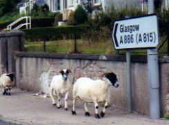 Direction roadsign to Glasgow from Butte