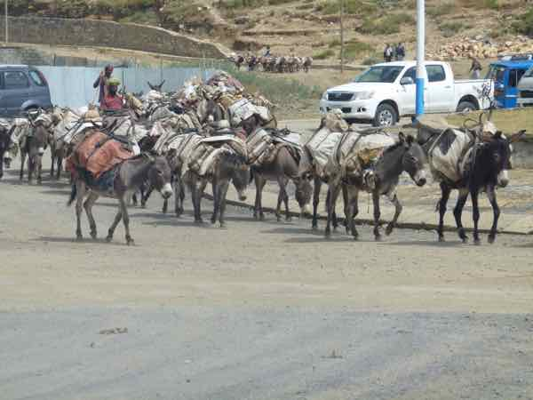 Donkeys Share The Road In Ethiopia