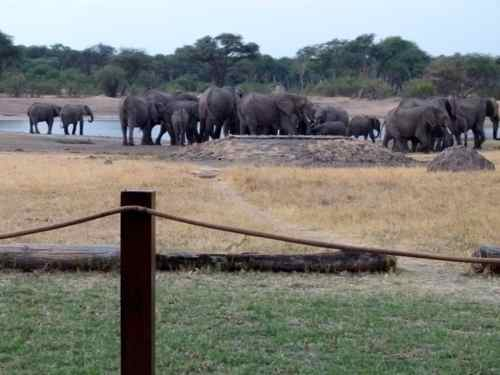 Elephants at The Hide waterhole, Hwange