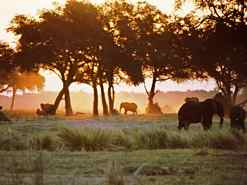 Elephants and African Sunset