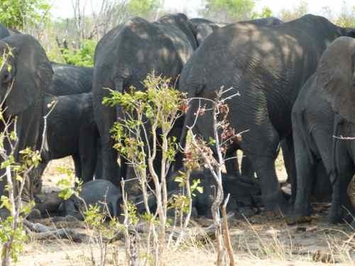 Elephants in Hwange NP, Zimbabwe