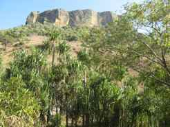 Isalo NP- endemic plants and sandstone massif