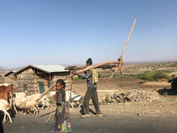 Ethiopian Farmer Carries Wooden Plow