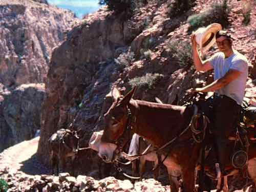 Wrangler and Mules on South Kaibab Trail in the Grand Canyon