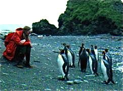Playing with penguins in Antarctica - You want to be there in the Antarctic summer!