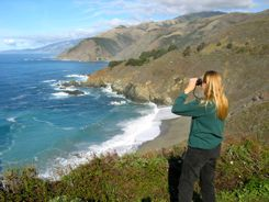 Looking for sea otters and condors along the Big Sur Coast