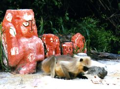 A real monkey with monkey god statues