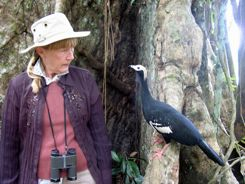 My new best friend in the Peruvian Amazon was a Piping Guan... and no he didn't have the bird flu and I was not afraid of catching anything