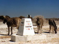 International roadsigns - Zebras and tourists get direction in Namibia