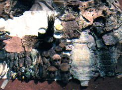 Herbs and monkey skulls - Medicineman Mali