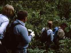 Hike the rainforest to find gorillas