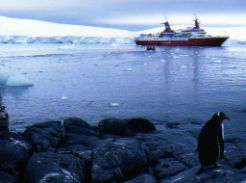 Cruise to Antarctica for lots of penguins