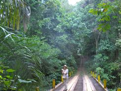 Birding Pipeline Road Panama
