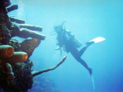 Scuba diving Little Cayman Island