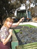 Cabernet Grapes Pyrenees Wine Region Australia