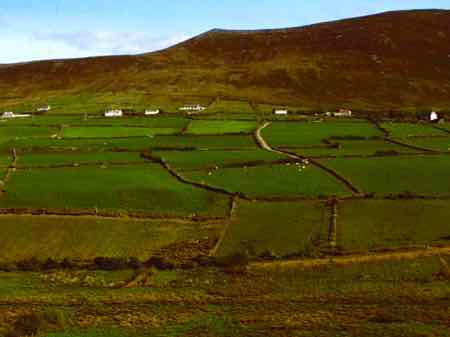 Farms in the Dingle Peninsula