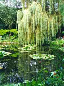 Monet's real Willows and Waterlilies at Giverny