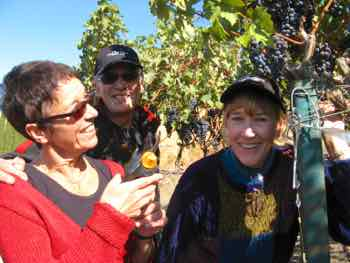Houseguests help pick grapes at wine harvest