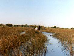 Makoros may use hippo channels Botswana