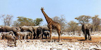 Elephants, giraffes and zebra at waterhole in Africa