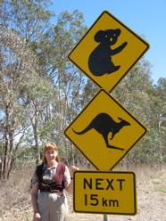 Australian Roadsigns tease about seeing koalas and kangaroos