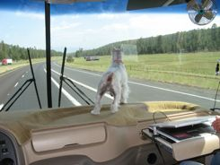 RV road trip - Pet can go along