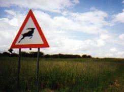 Caution sign - Kudu jumping across road