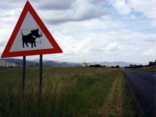 International road signs -- Caution Warthogs
